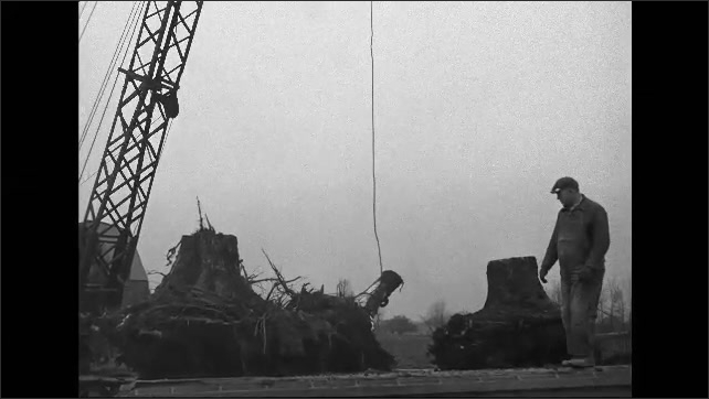 1940s: Construction site.  Crane lifts stump onto back of truck.  Man guides load.