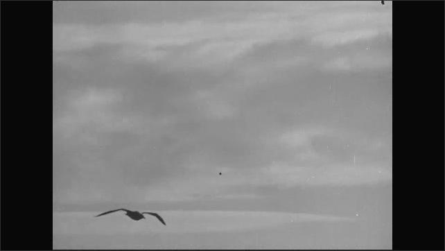 1940s: Birds fly over water.