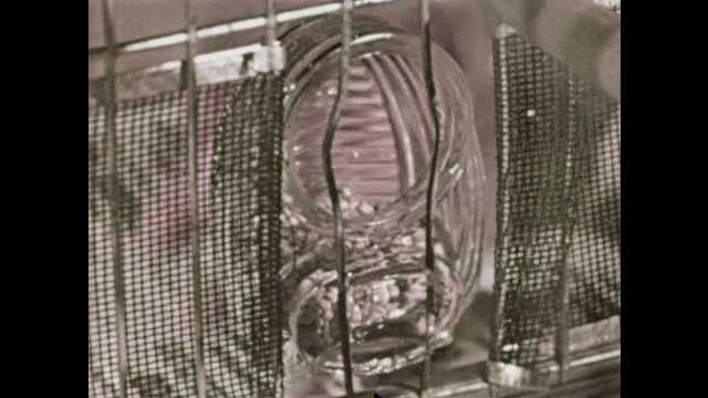 1950s: Hands change bird seed and water holders on side of cage. Parakeets interact in cage. Wild birds fly from nest and hunt in grass. Girl pets parakeets in cage.