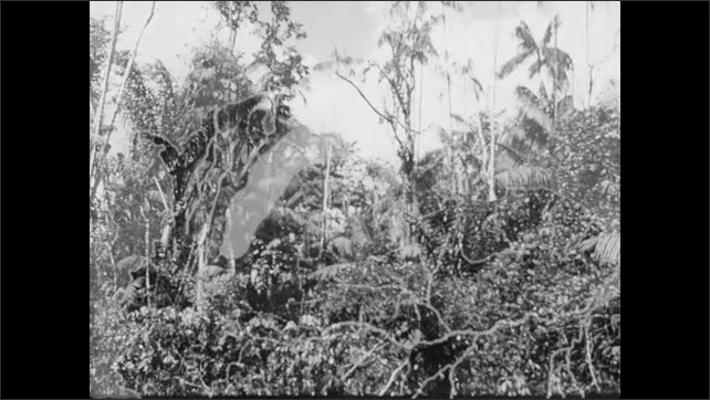 1950s: Woman breaks nuts with hammer near basket. Men roll log off platform into river. Trees stand in dense rainforest jungle. Highlighted areas and text appear on map. Cattle move across the plains.