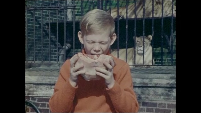 1970s: Zookeeper throws meat into tiger enclosure. Tiger eats. Boy pretends to take a bite of raw meat. Primate eats banana.