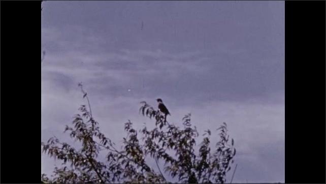 1970s: Grasshopper on leaf. Bird in nest. Bird on branch. Wasp's nest.
