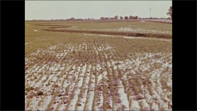 1970s: Automated loom in textile plant. Tractor harvests crops. Tractor harvests grain. Snow on field of crops. Grain is poured. Field of crops. People harvesting crops.