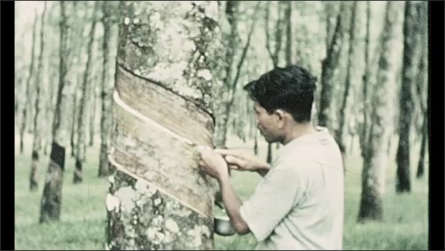 1970s: Front of office building. Front of office building. Man scrapes bark from around tree. People at work in field. People at outdoor market.