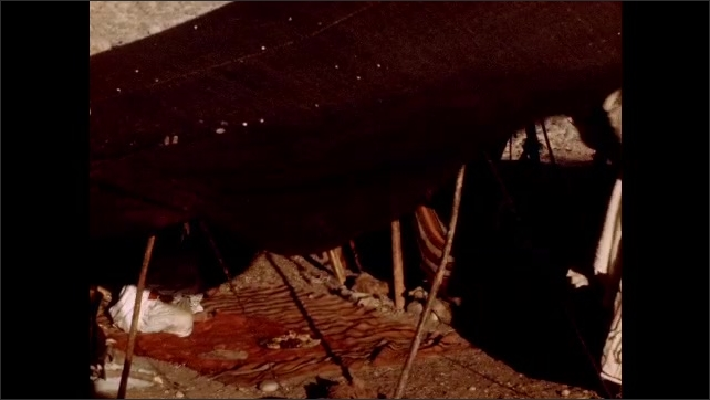 1950s: Man walks down ladder towards cow. Man lifts covering, ducks underneath. Tent falls over. Desert.