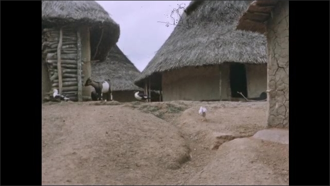 1950s: Man smoothes mud on exterior house. Round, thatched rooved huts with ducks and fowl walking outside. Group of men, women and children gather outside of hut.
