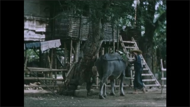 1950s: Girl holding books walks down stairs of stilt house. Girl turns and waves at woman in doorway. Man in broad straw hat leaves house towards cow. Man opens tent, ducks in and leaves tent.