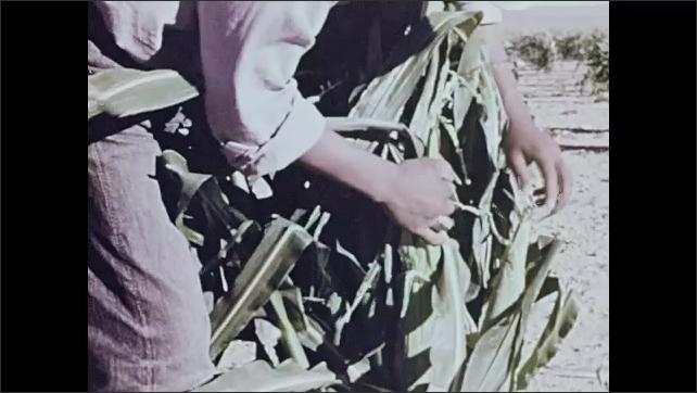 1960s: Hopi man in hat sits outdoors. Man walks amongst corn crops in desert landscape. Man picks corn. Cornfields in breeze. Farmer hoes dirt, picks up crop.