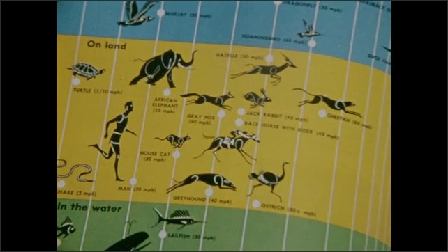 1970s: Page in encyclopedia. Cat walks across concrete. Lion walks across stream. Pages in encyclopedia, cats on page. Chart of animals, person. Insect on page. Grasshopper. Encyclopedia closes.