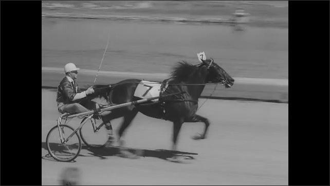 1960s: Horses pull people in carts around track in race. Spectators in stands watch. Winner is awarded. Intertitle.