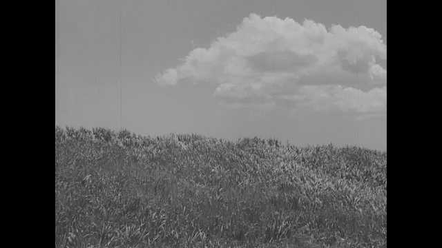 1941 Pearl Harbor: Wind blowing field of grass.