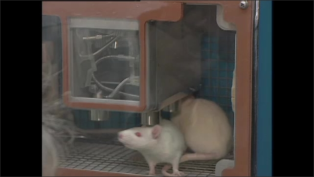 2000s: Three people talking in lab. Woman looks into microscope while man stands nearby. Two women in lab. Rats in cage. Man and woman talk in lab.