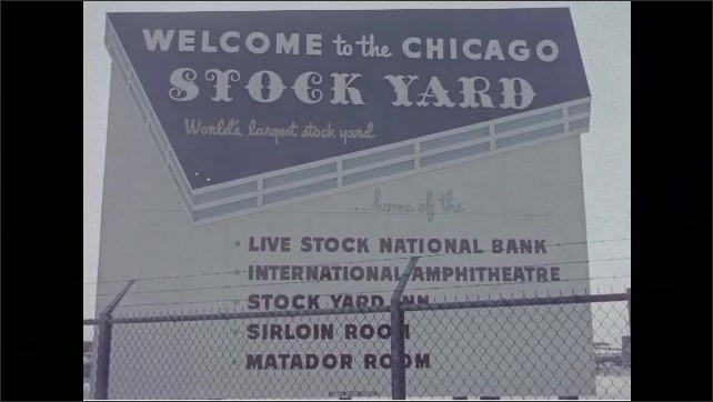 1960s: Cows in stock yard. People stand in front of building. Sign on building for Saddle and Sirloin Club. Sign for Chicago Stock Yard. Flying in airplane over houses.