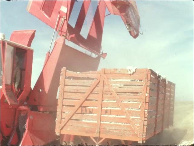 1960s: UNITED STATES: machine tips cotton into trailer. Hesston cotton picker