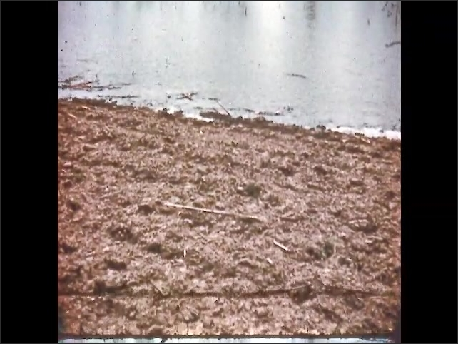 1950s: UNITED STATES: flooded field. Rain ruins crops. Farmer at mercy of weather. Trees on farm.