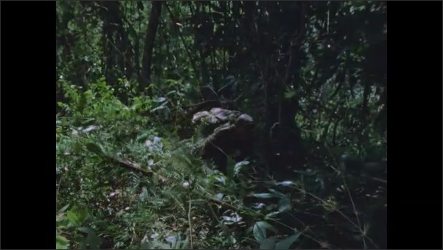 1960s: Soldier creeps through jungle.