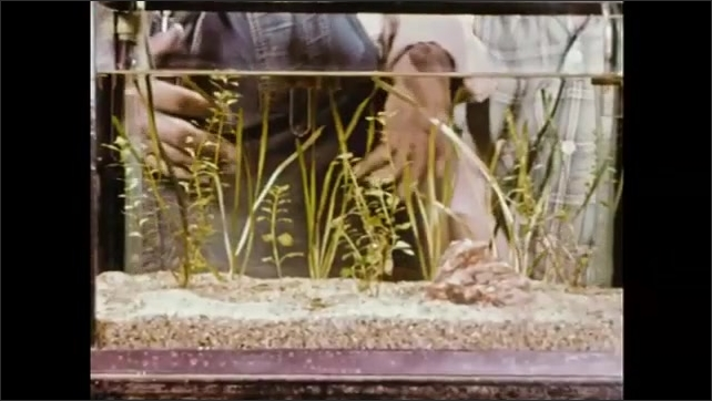 1950s: Man and children next to aquariums. Man points to Egyptian Mouthbrooder fish in tank.