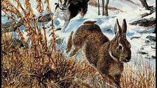 Youth Rabbit Hunts - Early Season