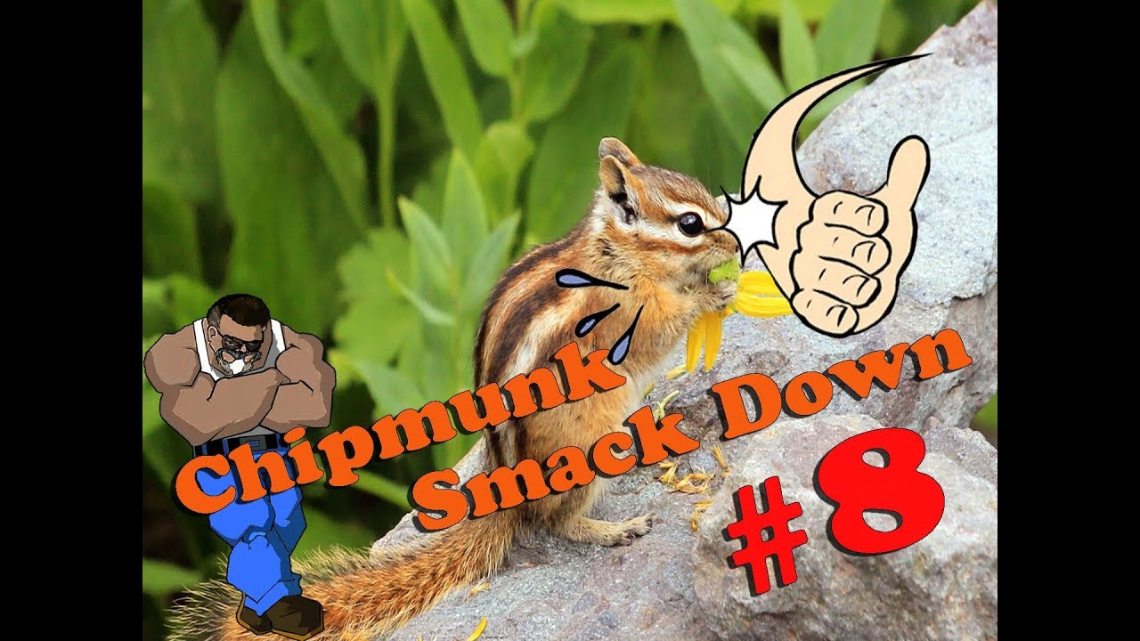 Chipmunk Smackdown #8: Read Description