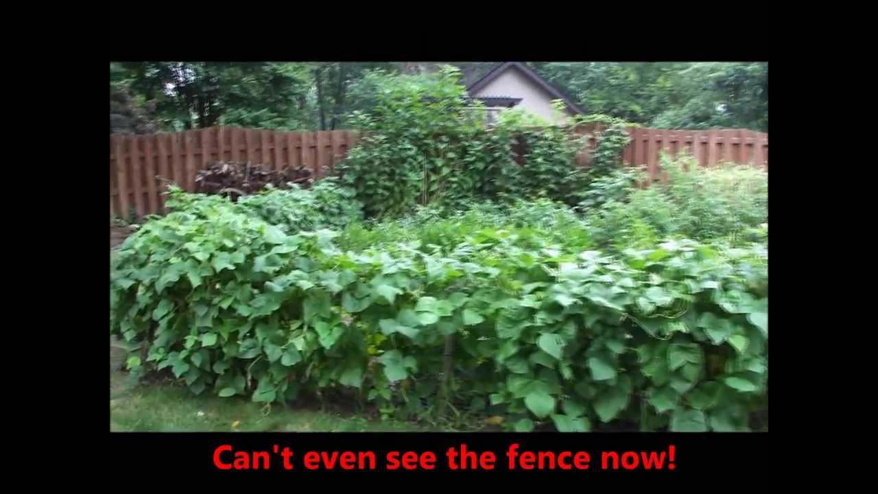 Savin' the Day Garden- Update