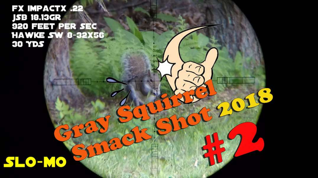 Gray Squirrel Smackshot #2 of 2018