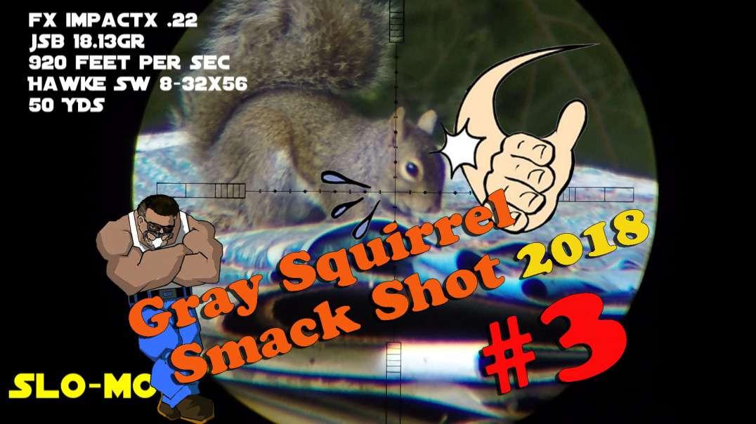 Gray Squirrel Smackshot #3 of 2018