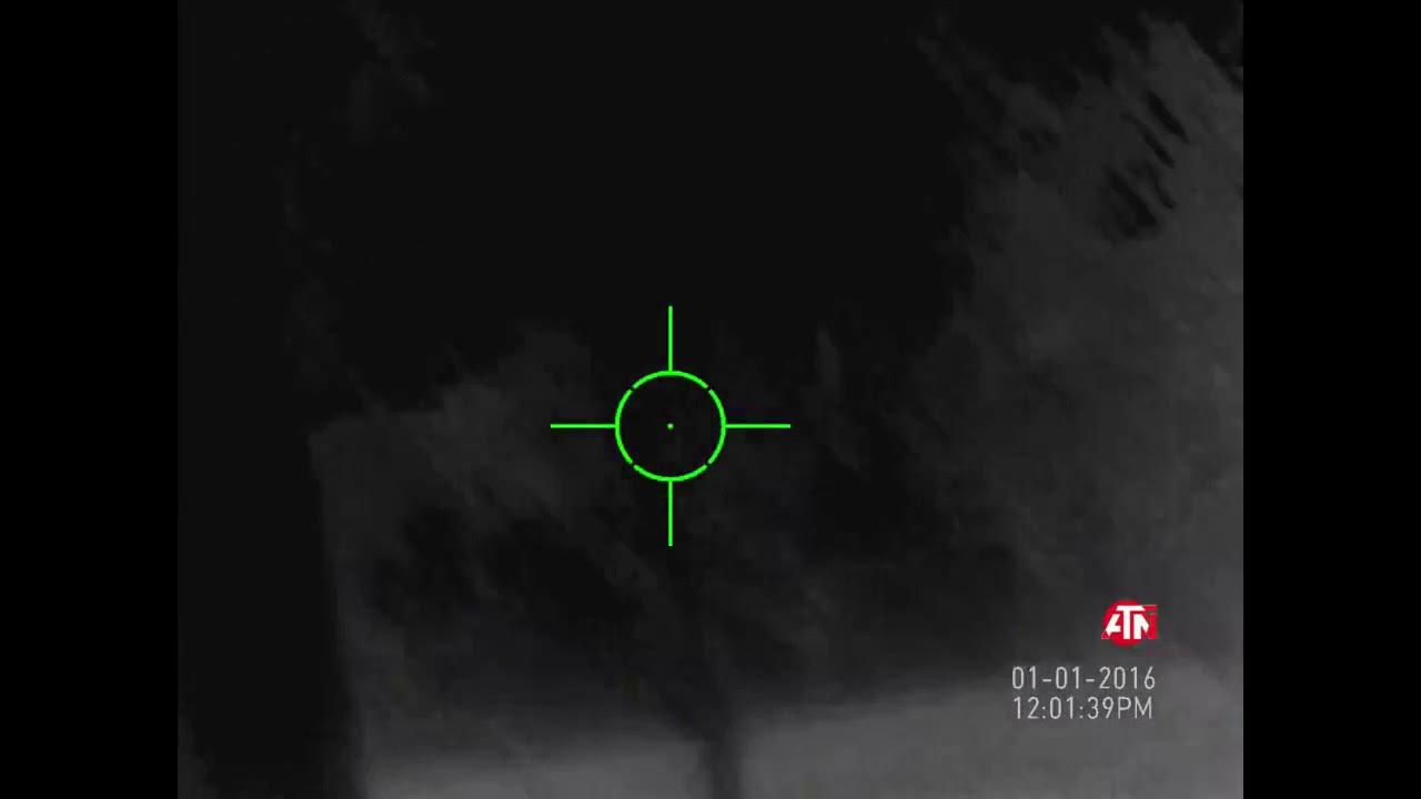 140 yard boar kill with ATN Thermal Rifle Scope ThOR-HD
