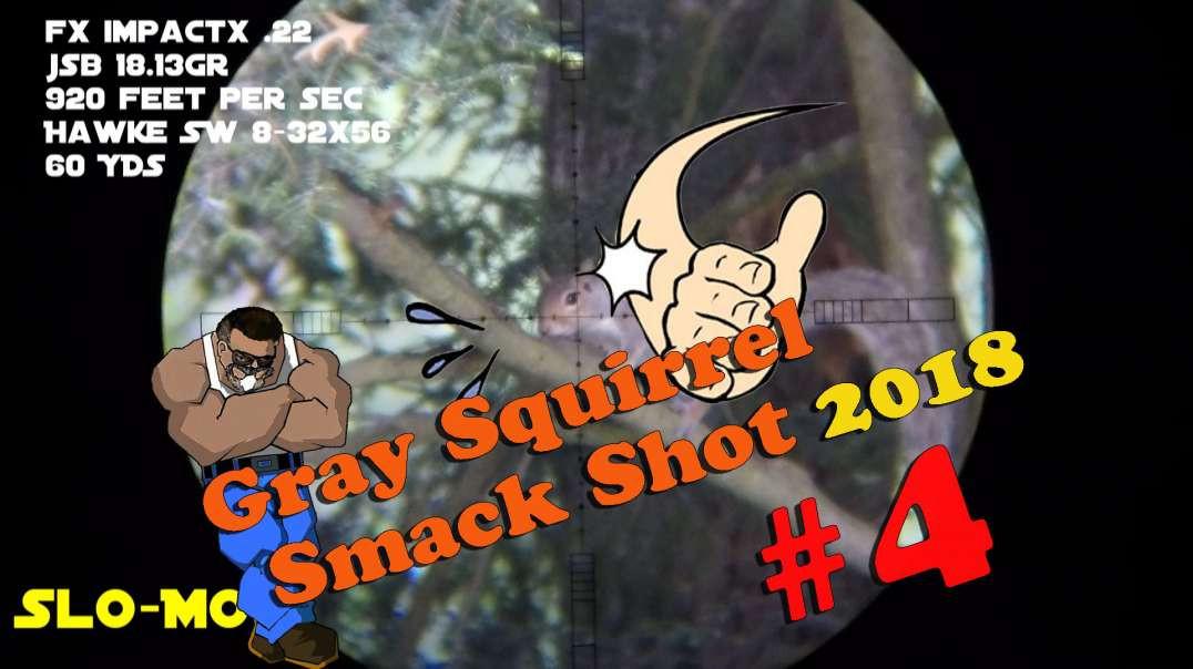Gray Squirrel Smackshot #4 of 2018