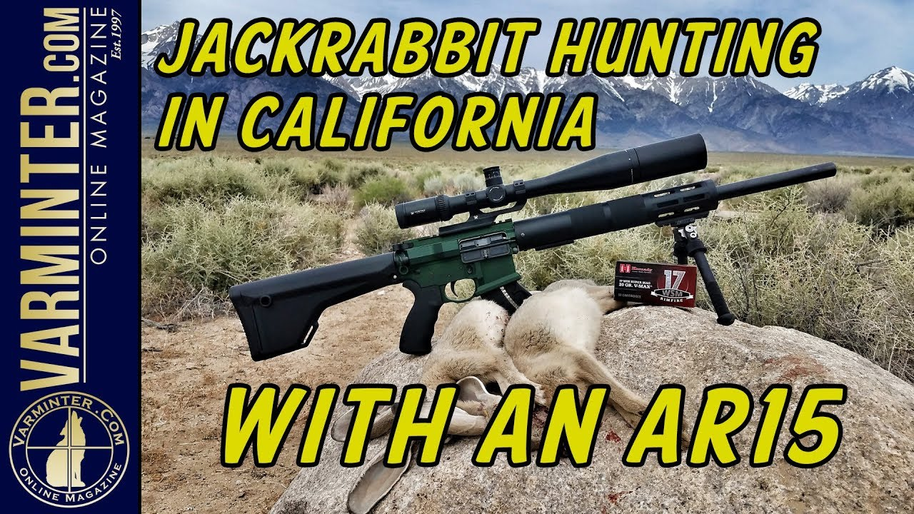 Jackrabbit Hunting in California with an AR15 in 17WSM