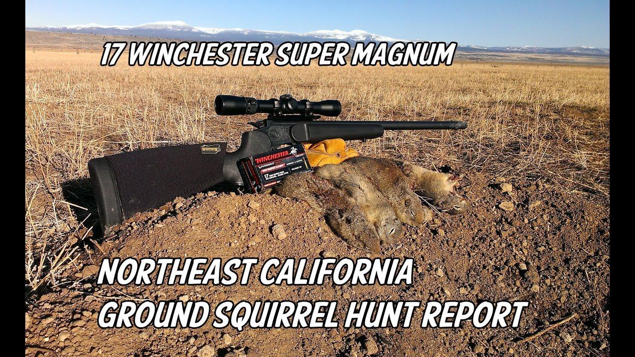 NE California Ground Squirrel Hunt Report - 17 Winchester Super Magnum -