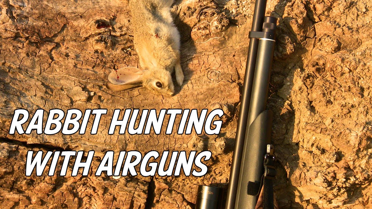Rabbit Hunting with Airguns