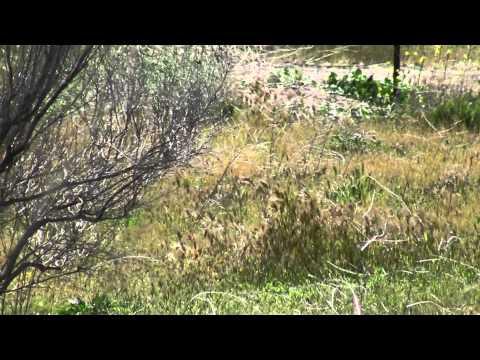 A Couple of Benjamin Discovery - Predator Pellets Video Clips