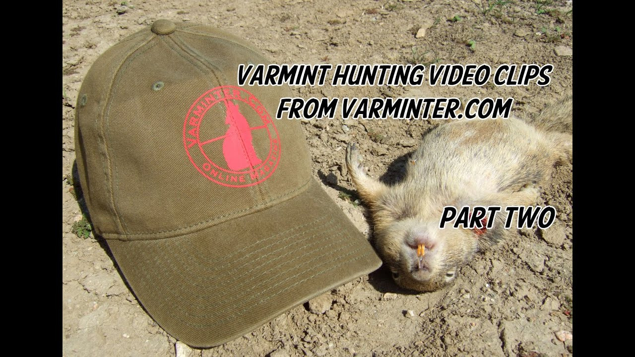Varmint Hunting Video Clips from Varminter.com - Part Two