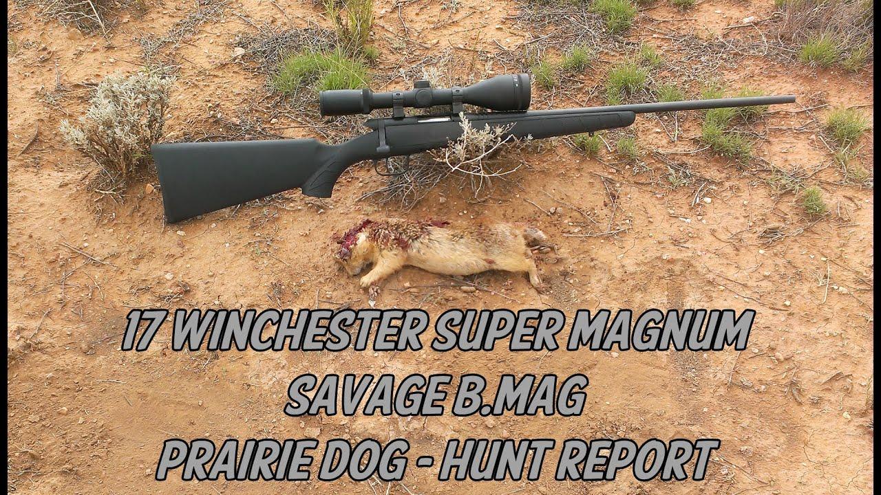 17 Winchester Super Mag & Savage BMAG - Prairie Dog Hunt Report