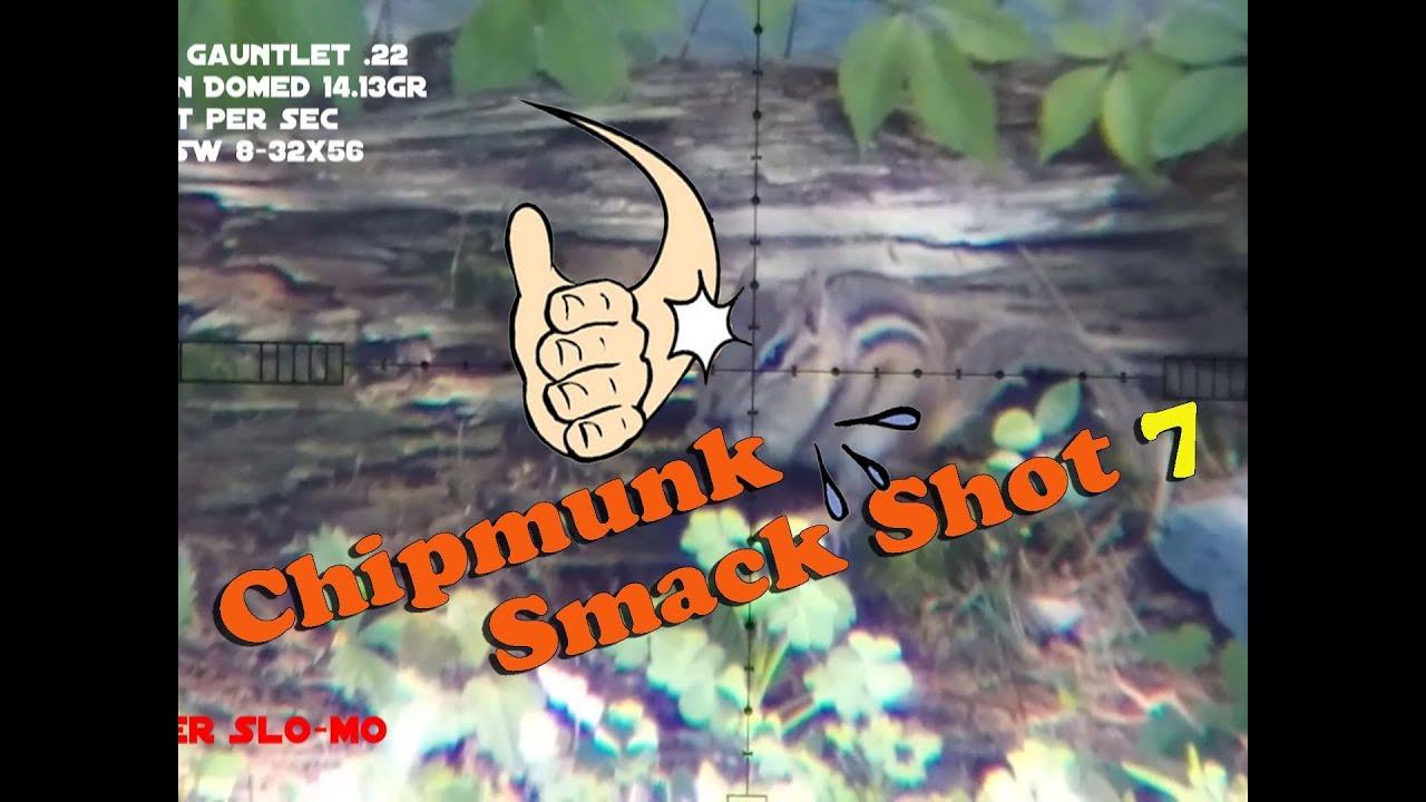 Chipmunk Smack Shot #7