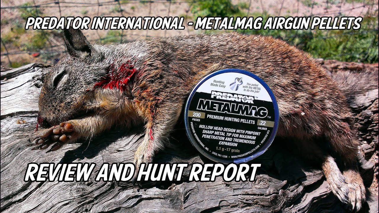 Predator International - Metalmag Airgun Hunting Pellets Hunt Report & Review
