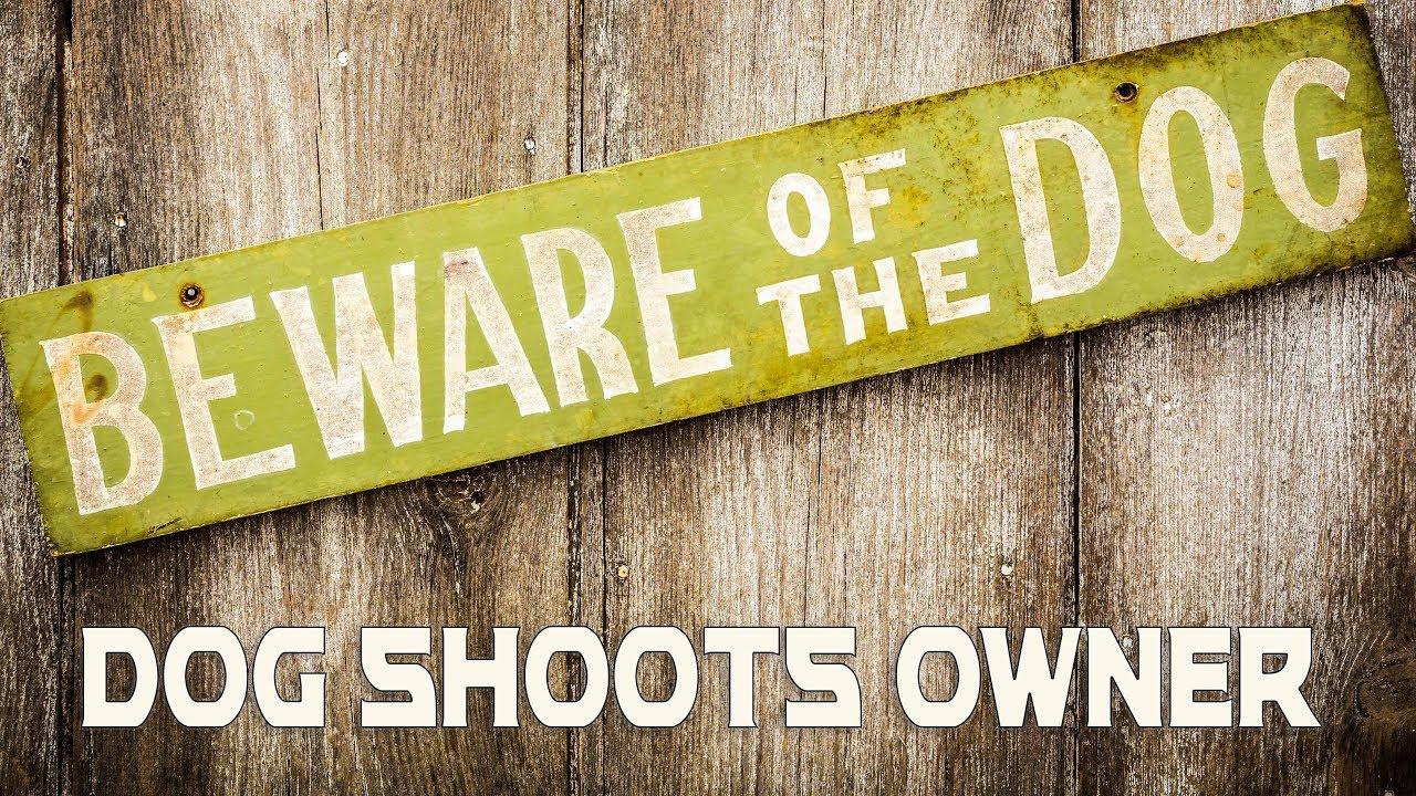 Dog Shoots Owner