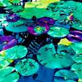 Lilly pads two