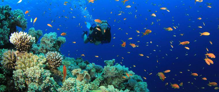 Top 4 Diving Spots in the Aegean Sea